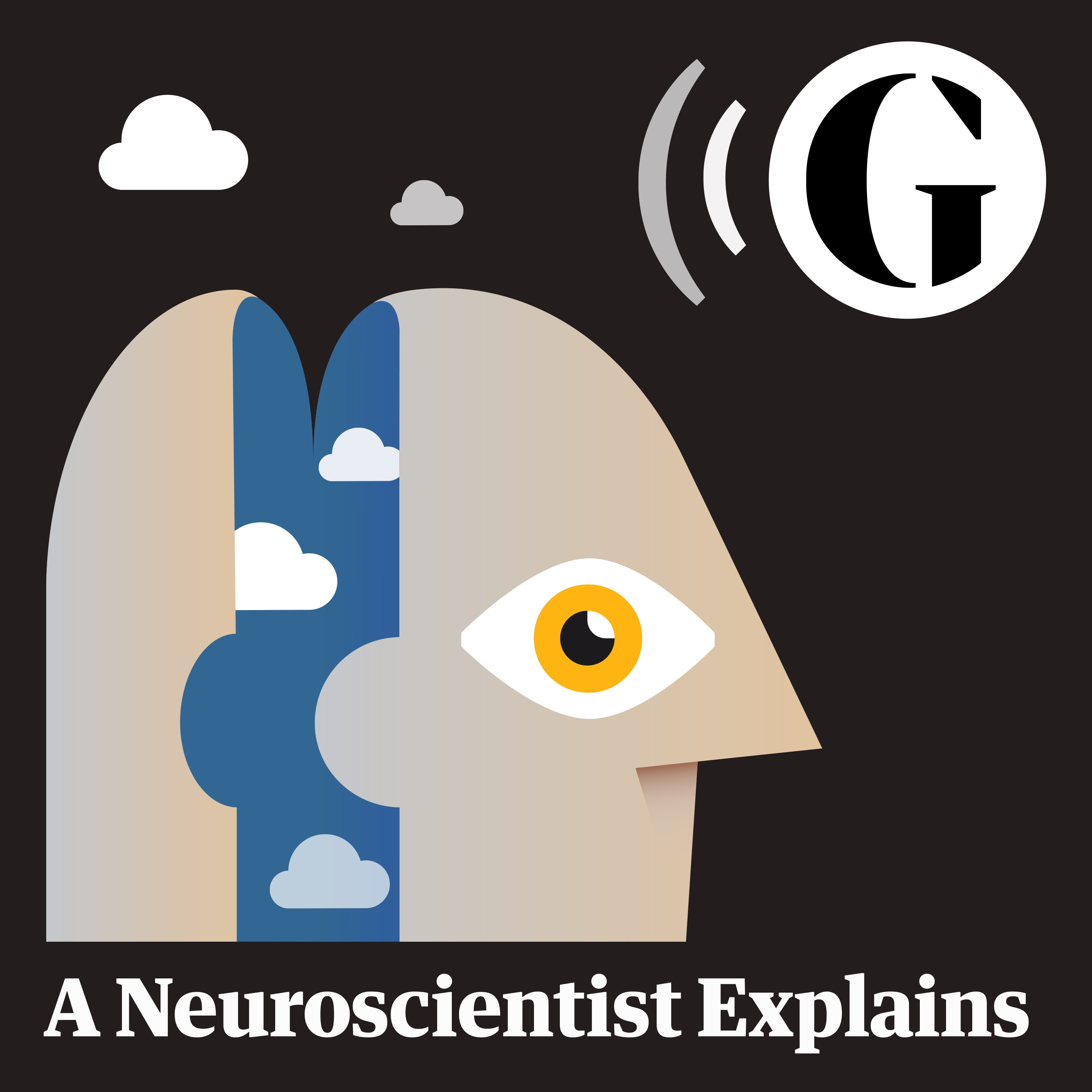 A Neuroscientist Explains Where Perception Ends And Hallucination